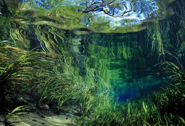 Springs of Florida